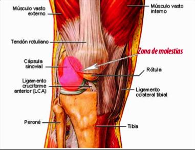 Causas del dolor de cadera al correr isaf formaci n - Dolor en la parte interior de la rodilla ...
